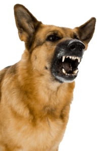 Electronic Barking Dog Alarm Barking Dog Photo